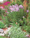 Альбом:  Цветы в саду